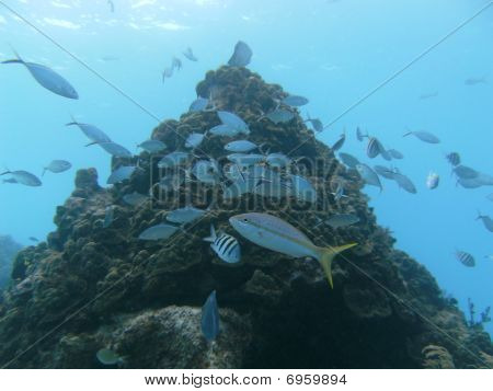 Fish Underwater on the Coral Reef