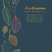 border frame of colorful autumn leaves on dark background poster