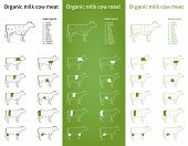 Icon set of bio organic milk cow (beef) meat parts for packaging and info-graphic in three green version poster