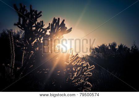 Sunrise over the desert - Scottsdale,Arizona,USA poster