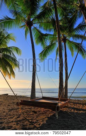Bed Hangs From Palm Trees With Rope