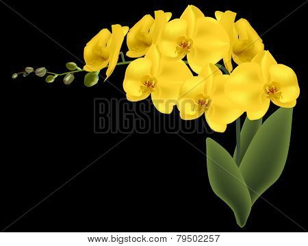 illustration with yellow orchid flowers isolated on black backcground