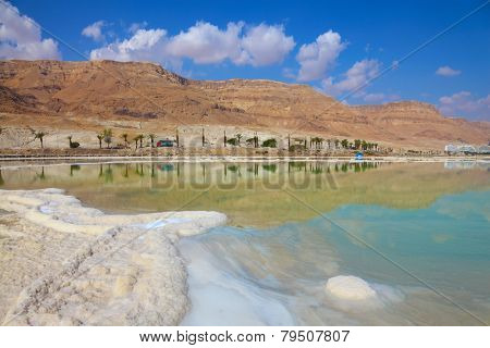 Shores of the Dead Sea in Israel. Path of evaporated salt. Along the shore with palm trees, which are reflected in the water