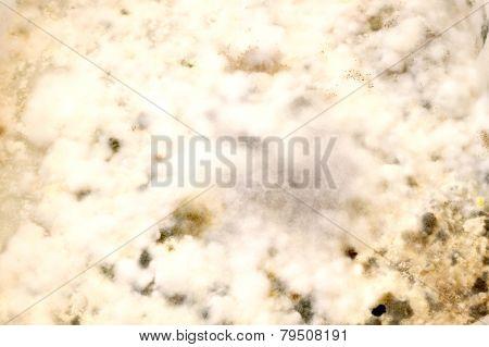 Mold on Flour