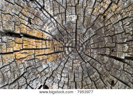 Old Tree Rings