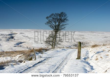 Winter Moorland Landscape