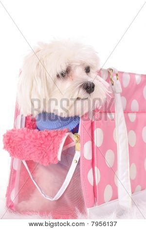 shot of a cute maltese doggy travel tote poster