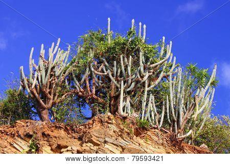 British Virgin Islands Natural Landscape