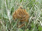 amazing moving living knot of spring caterpillars on wet grass poster