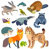 Illustration of isolated forest animals set on white background. poster