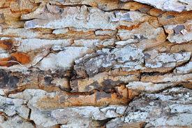 tree skin texture