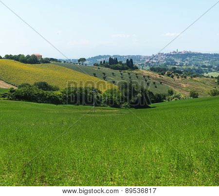 Landscape near Macerata (Marches Italy) at summer poster