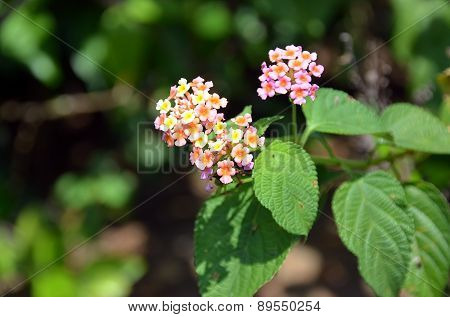 Macro Detail Photo Of Small Flowering Plant Bush