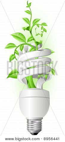 Lamp with plant