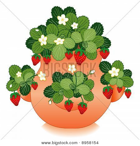 Strawberries in a Strawberry Jar