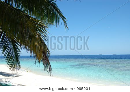 Views Of The Maldives Beaches 5