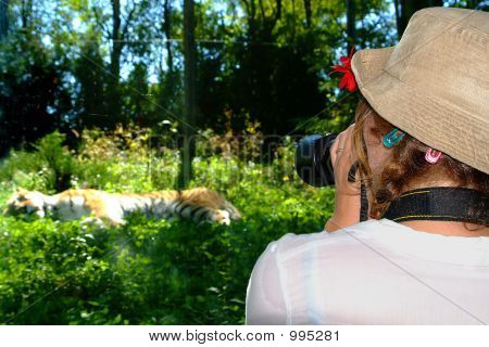 photographer taking a picture of a photographer photographing a tiger poster