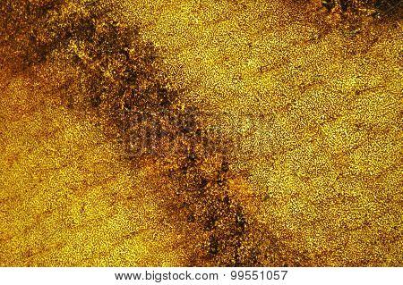 Atlantic Mackerel (Scomber Scombrus) Skin Texture