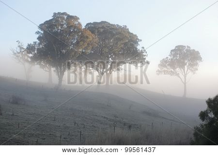 A crisp winters morning and a thick blanket of fog mutes the scene while fog frost crystals across the rural landscape crunch underfoot... awaiting the fire of the winter sunbeam to melt poster