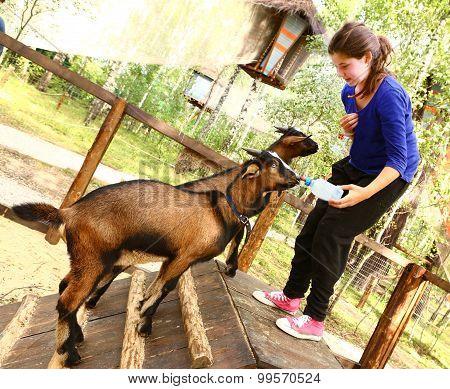 teen girl feeding baby goat from nipple milk bottle