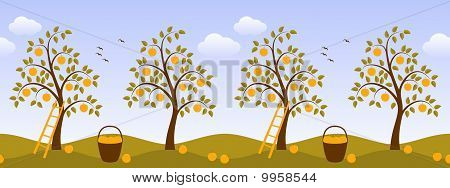 Apple Tree Border