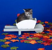Cute kitten sitting in wheel barrow on blue background with fall leaves poster
