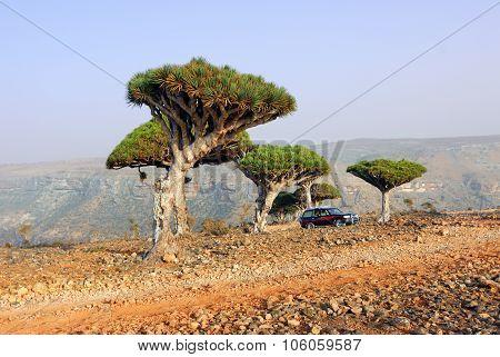 Socotra Off-road Safari