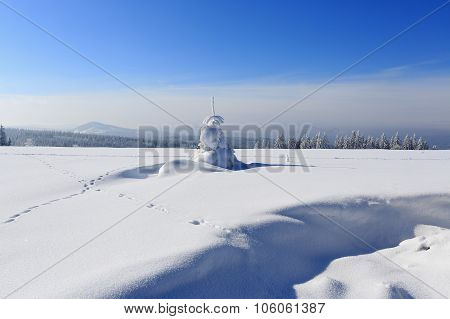 Winter Landscape And Snow Wrapped Trees