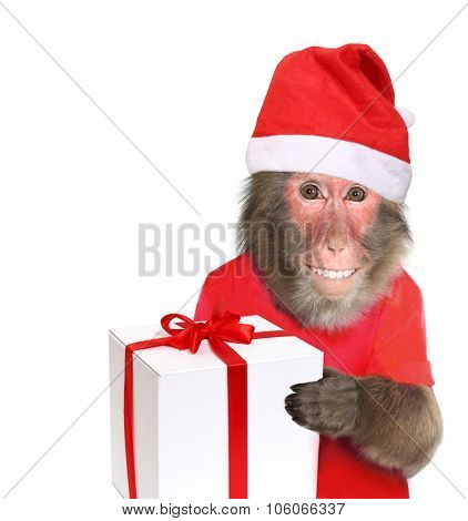 Funny monkey Santa Claus  with christmas  gift