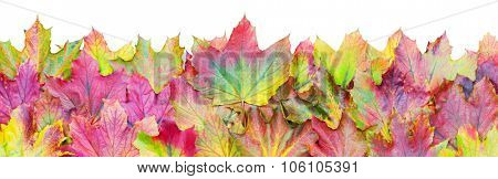 Border of colorful autumn leaves isolated over a white background