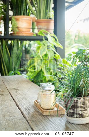 Small Plant Pot Displayed In Coffee Shop Vintage Color