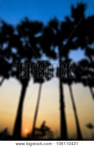 Blur Background Of Coconut Tree