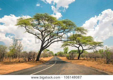 African Landscape With Empty Road And Trees In Zimbabwe - On The Way To Kazungula And The Border