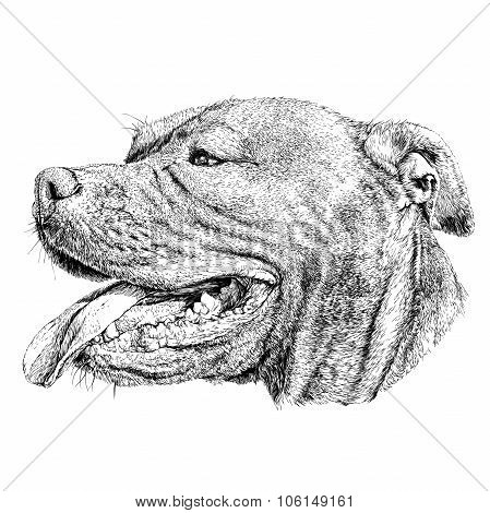 Sketch of Dog Pit bull terrier. Vector Illustration