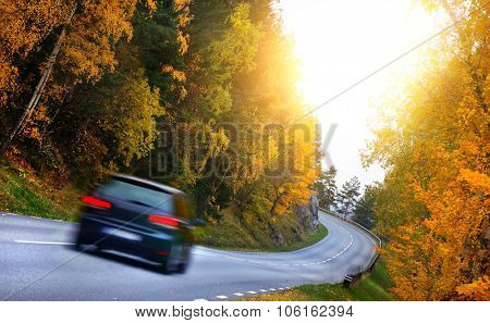 Car on the road in the fores