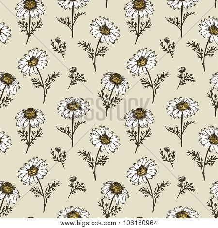 Chamomile Flowers Vector Pattern
