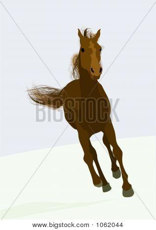 Race-Horse