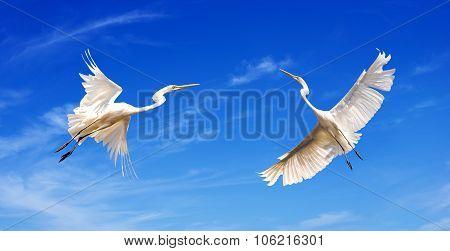 Beautiful Tropical Cranes
