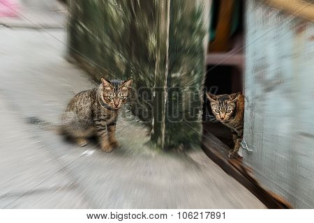 Twin Cats Looking Ferocious With Zoom Effect