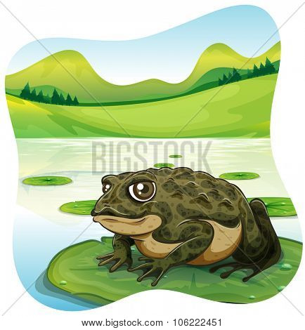 Green toad on water lily  illustration