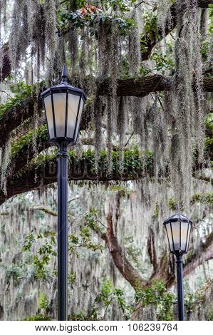 Two Lamps And Spanish Moss
