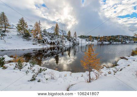 .small Larch Near Mountain Lake