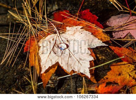 Water drop on floating maple leaf