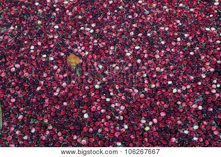Floating cranberries
