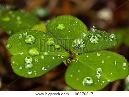 Leaves with drops of water.