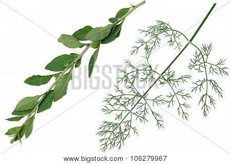 Vegetable Leaf