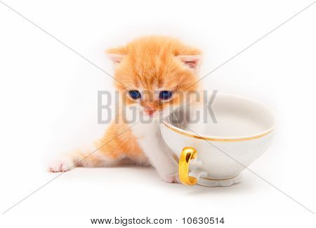 The Nice Red Kitten Plays With A White Cup