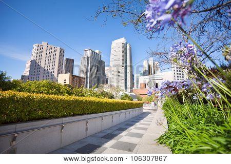 Flowers in Yerba Buena Gardens park, San Francisco