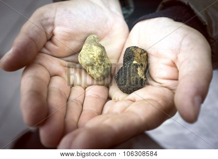 Black and white truffles. Color image