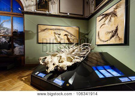 Exhibition In Naturhistorisches Museum, Vienna